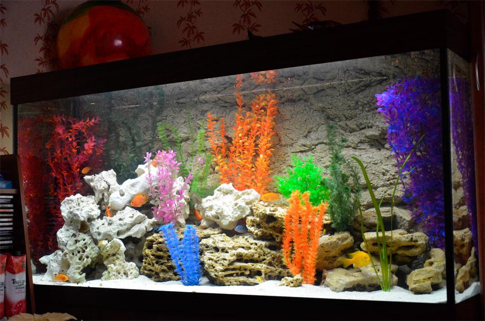 Аквариум с разнообразным грунтом