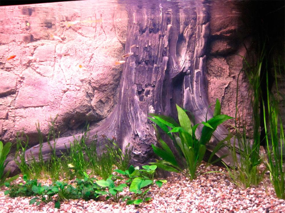 Украшение аквариума корягами