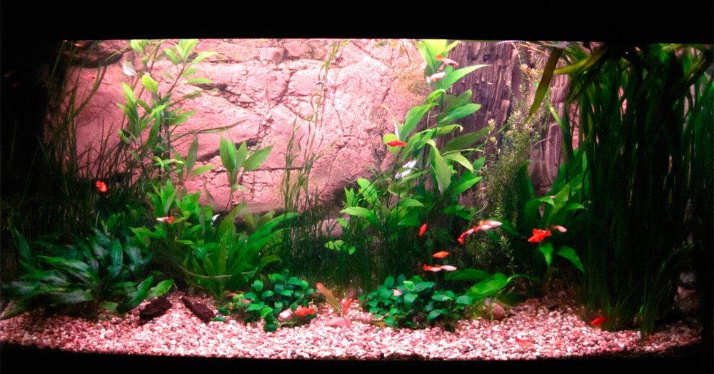 Украшение аквариума растенияма