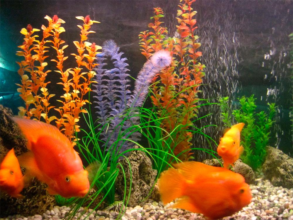 Содержание аквариума