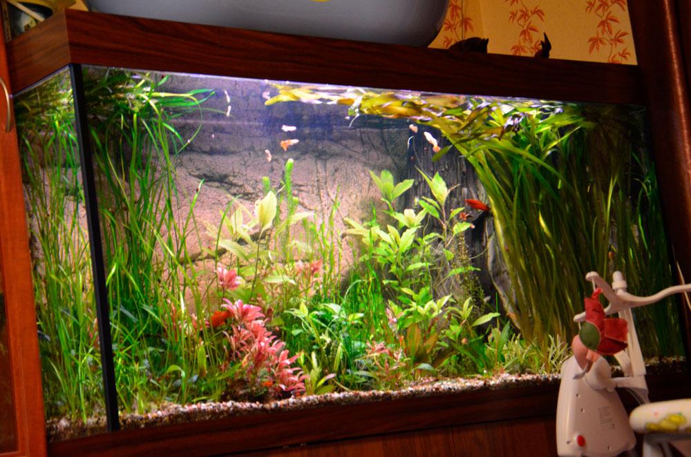 Украшение и оформление аквариума